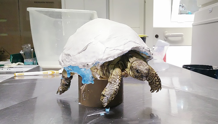 ZORTRAX 3D Printed Turtle Prosthesis Model