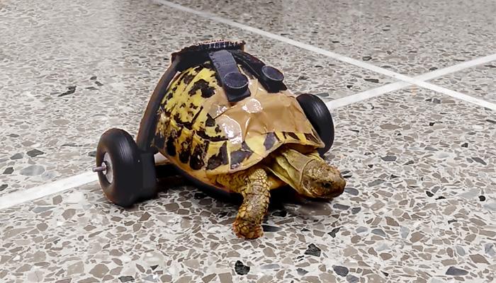 ZORTRAX 3D Printed Turtle Wheels