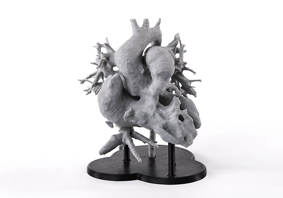 Intricate model of the human heart  based on MRI scan. The model was 3D printed with Z-PLA filament and water-soluble support to accurately represent complexity of the organ.